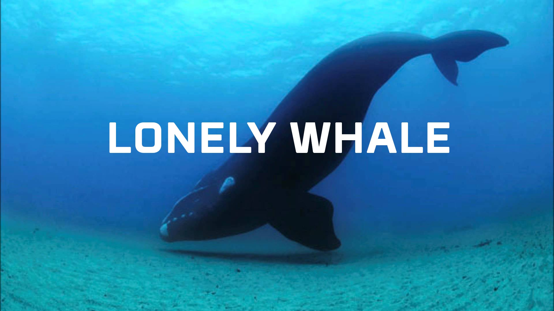 Can virtual reality help us empathize with whales? See for yourself.