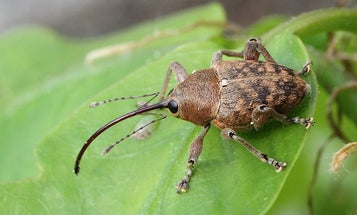 Bugs Collected From Copenhagen Rooftop Document Effects Of Climate Change