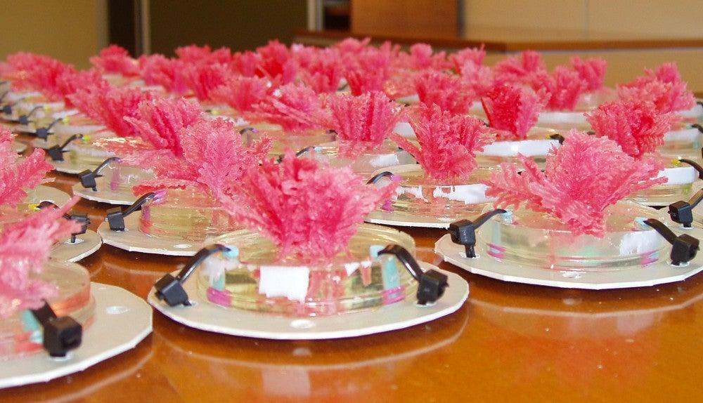 Artificial coralline algae