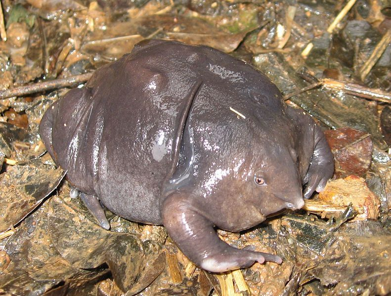 A Campaign To Save The World's Ugliest Endangered Animals
