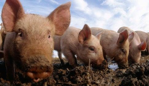 Are We Unintentionally Breeding Hordes of Killer Super-Animals?