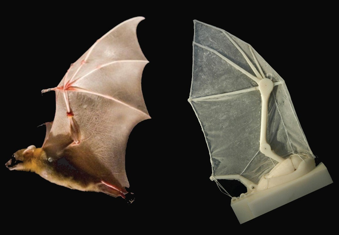 Flapping Robotic Wing Helps Biologists Uncover Secrets Of Bat Flight