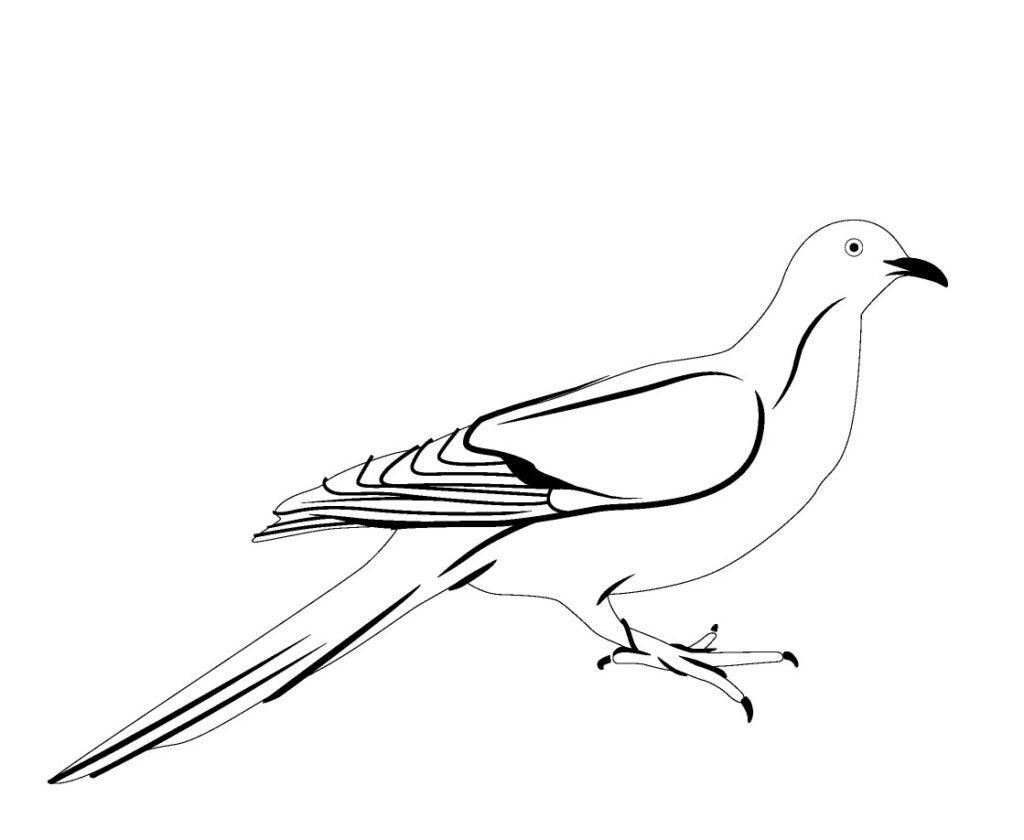 httpswww.popsci.comsitespopsci.comfilesimages201505passenger-pigeon_0.jpg