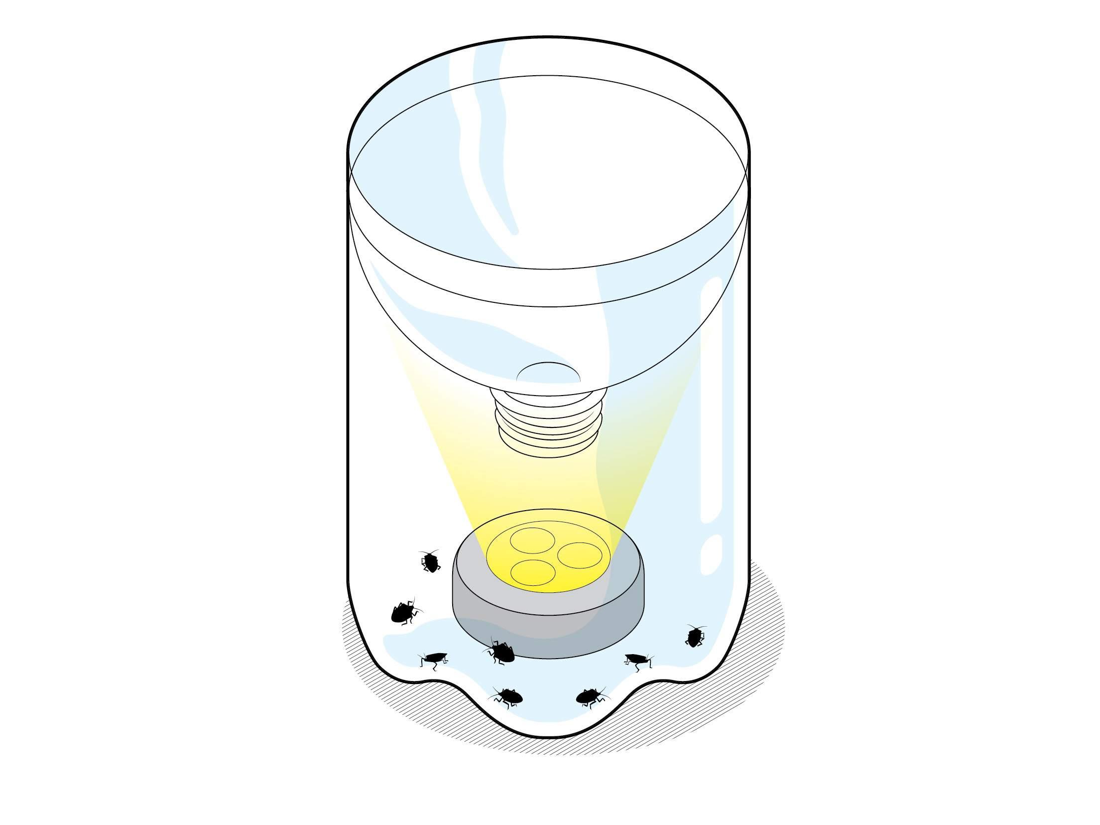 A homemade stinkbug trap