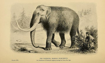 Japanese Researchers Announce Plan to Resurrect Woolly Mammoth Within Five Years