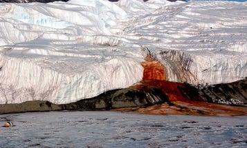 Life Thrives Below Antarctic Glacier