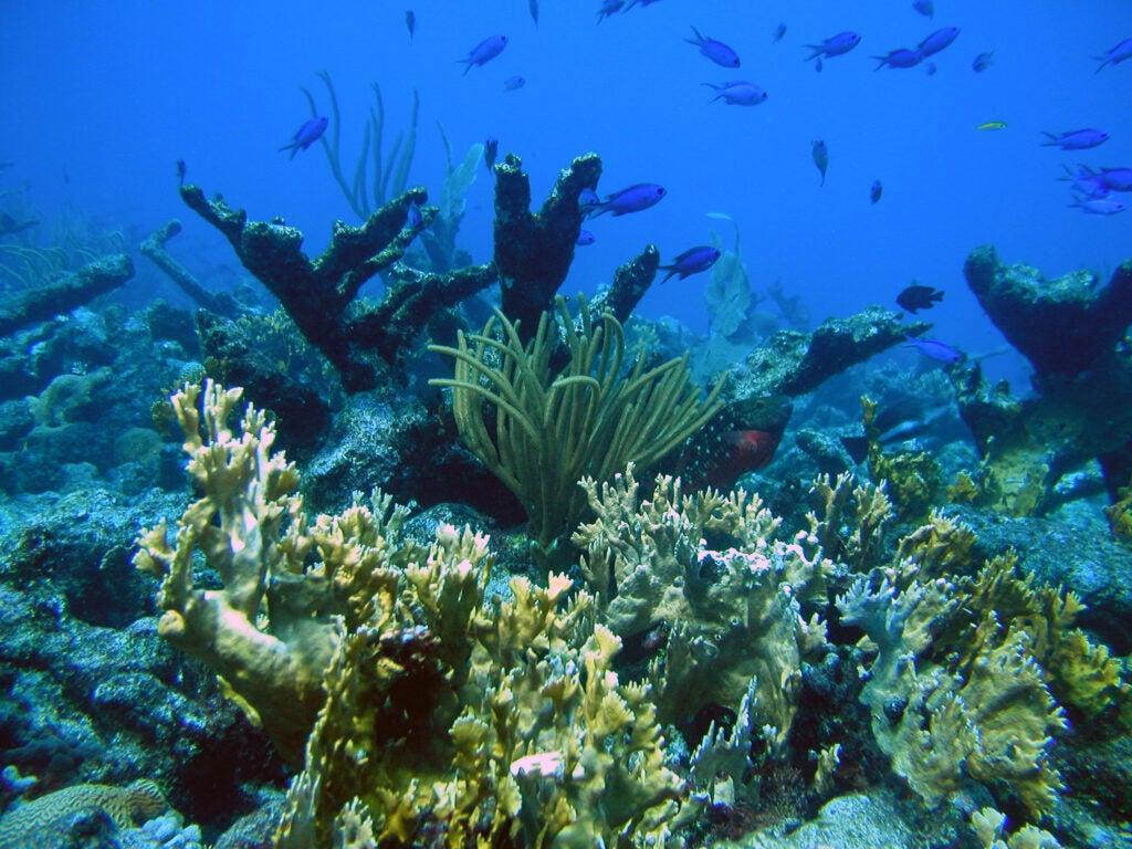 """""""Reefs"""""""
