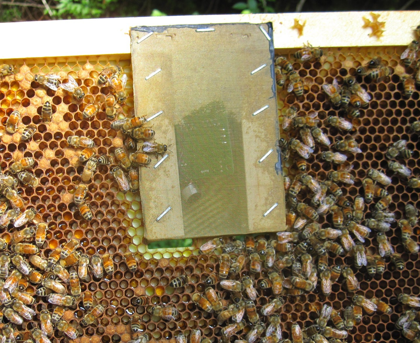 Bee Hackers Help Hives With Unconventional Tools