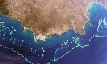 Australians Cryogenically Freeze Coral Sperm From The Great Barrier Reef