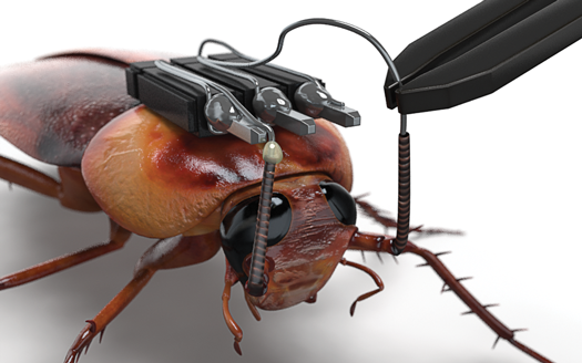How To Hack A Cockroach So You Can Control It With Kinect