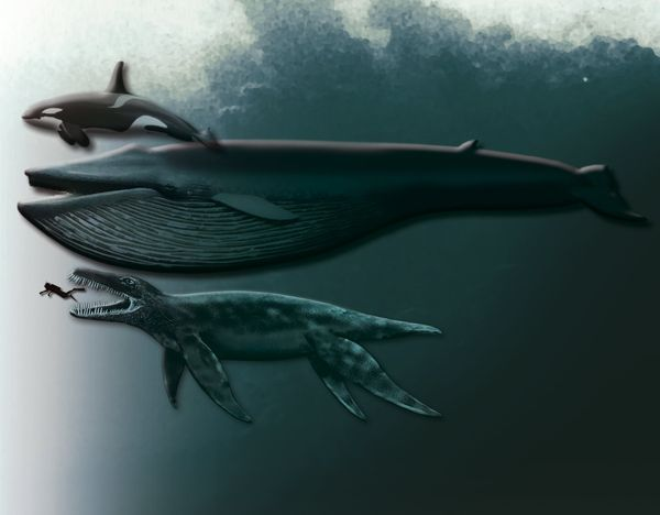 Scientists Uncover Fossil of Enormous Sea Monster