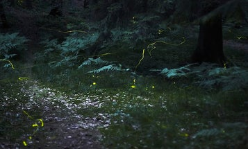 Researchers Reverse Engineer Fireflies To Make More Efficient LEDs