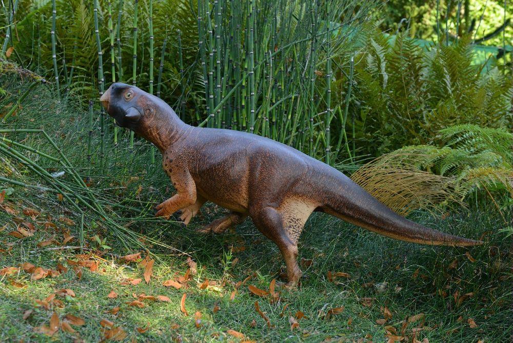 """Psittacosaurus'"