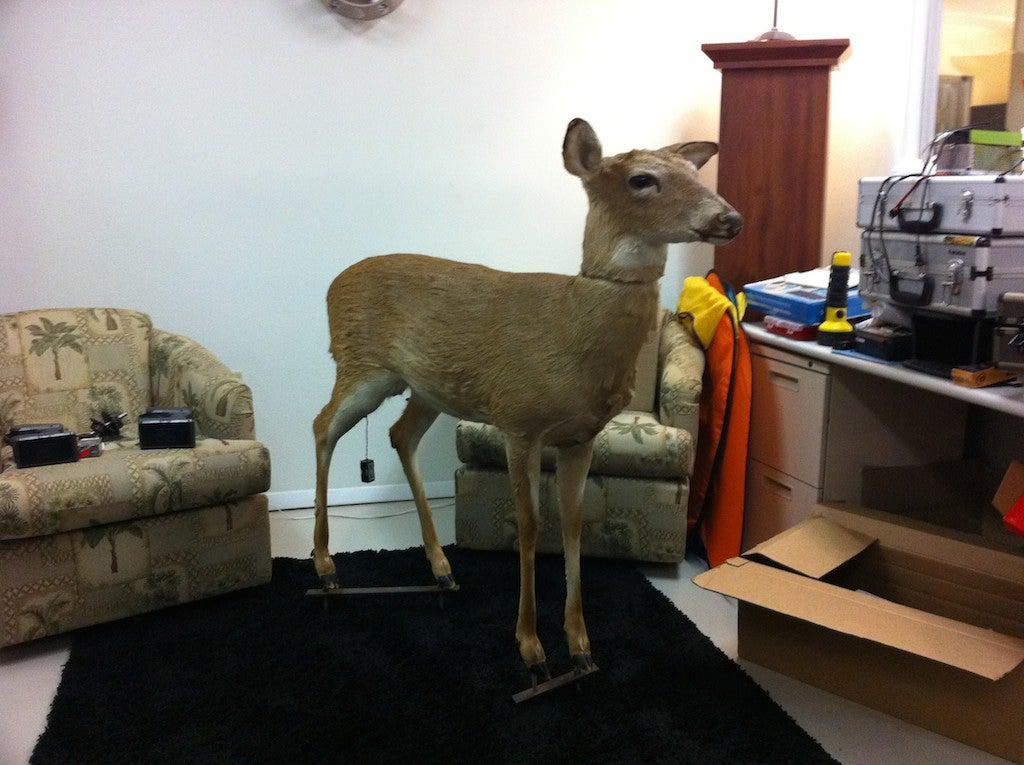 How To Build A Robo-Deer To Catch Poachers