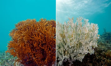 The World's Coral Is Experiencing A Massive Bleaching Event