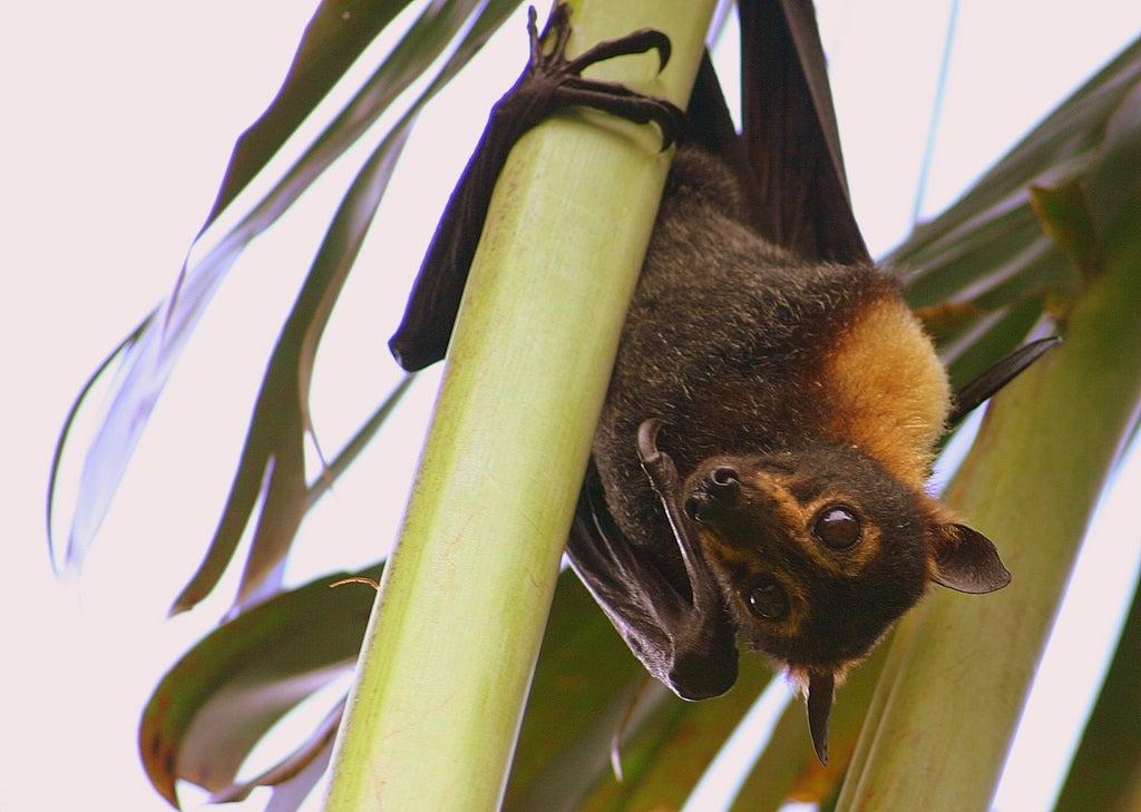The Turbine Tweak That Could Save Battered Bats