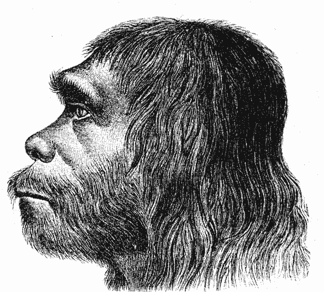 How Neanderthal Are You?