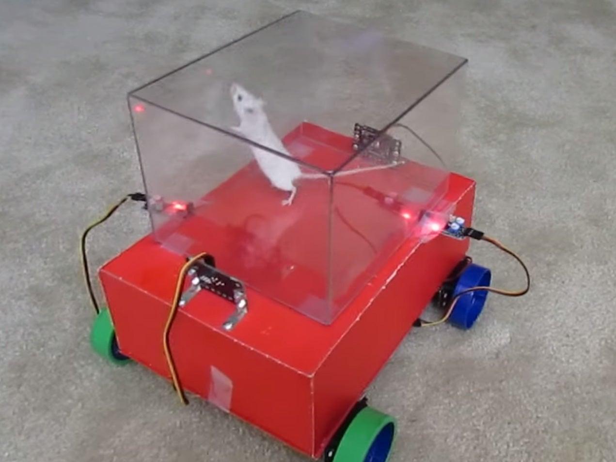 Watch A Rat Drive A Tiny Car