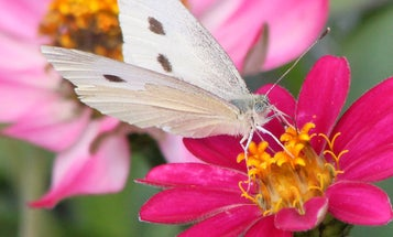 Studying Pollinators With 3D-Printed Flowers