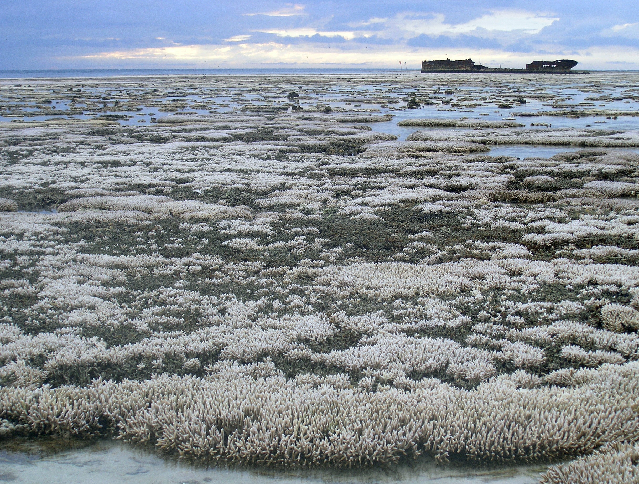 The Great Barrier Reef Has Herpes