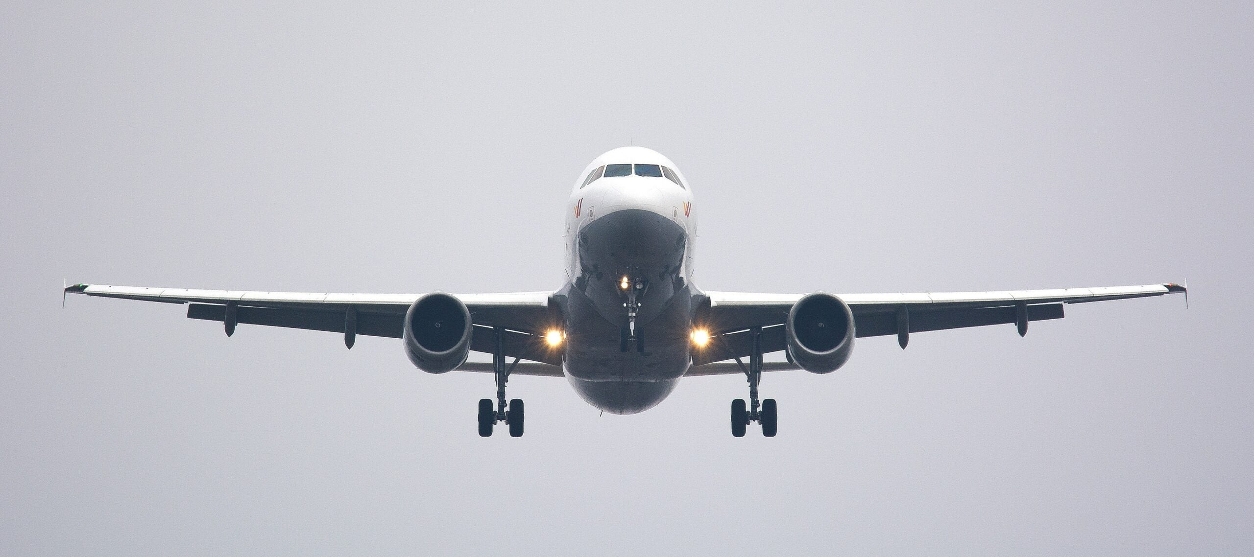 To shorten flights and lower emissions, scientists are discussing the birds and the bees