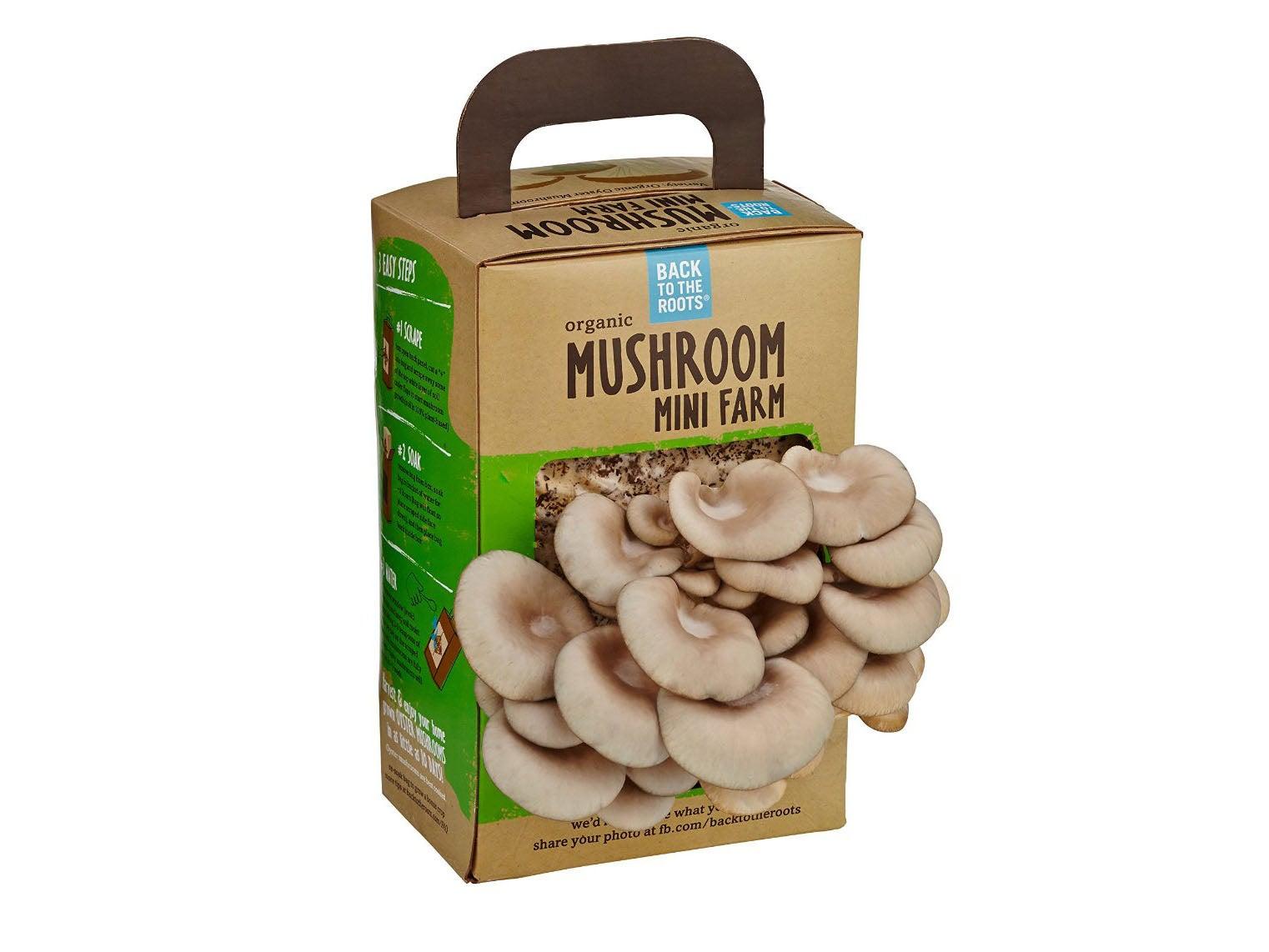 mini mushroom farm package