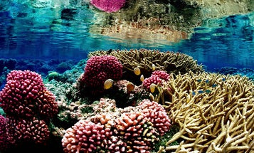 Corals grow in patterns, even if we can't always see them