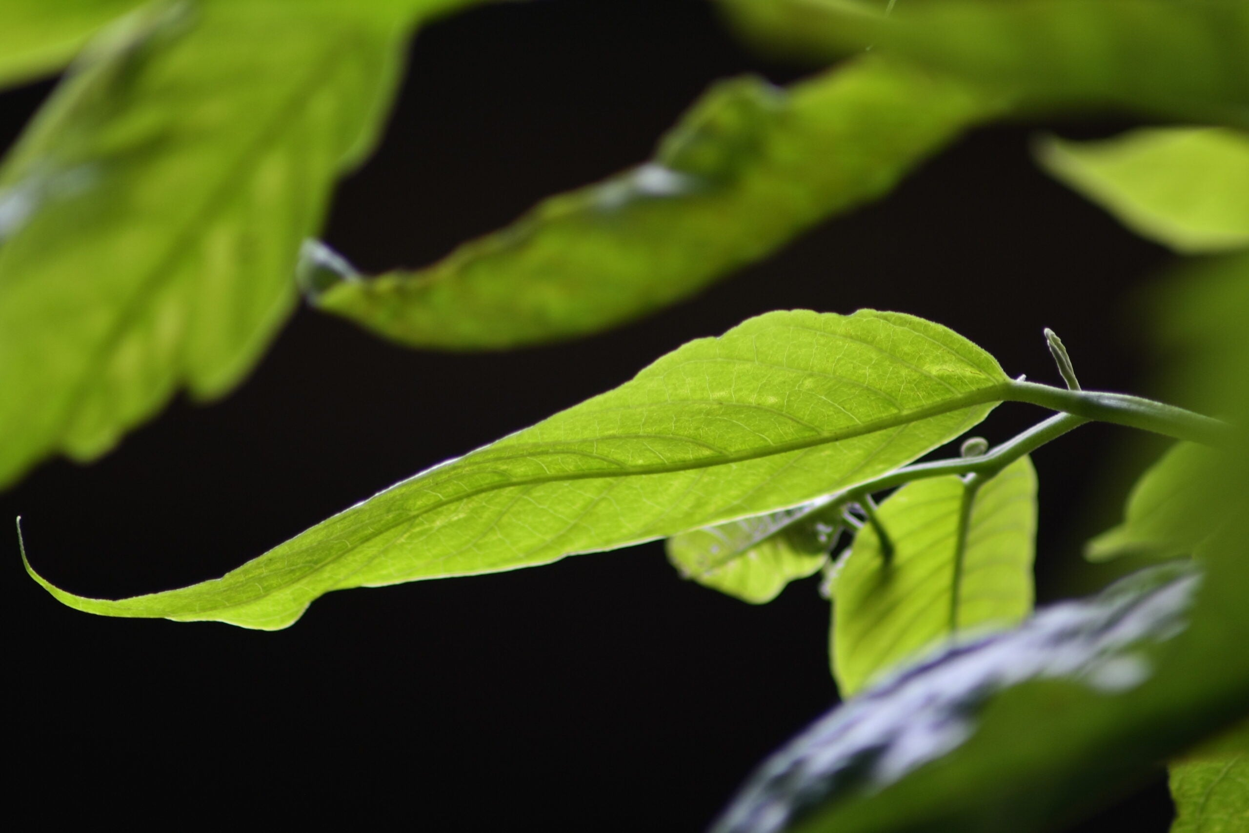 This Is The State Of The World's Plants, By The Numbers