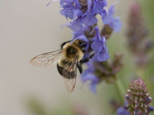 A small city in Iowa is devoting 1,000 acres of land to America's vanishing bees