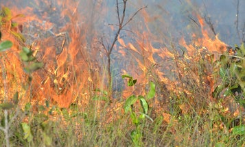 Commercial agriculture is preventing wildfires—and that's not good news