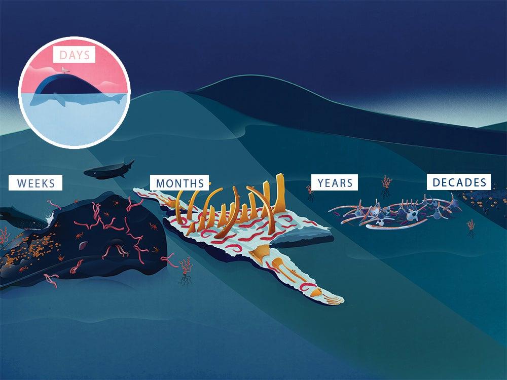 dead whale graphic