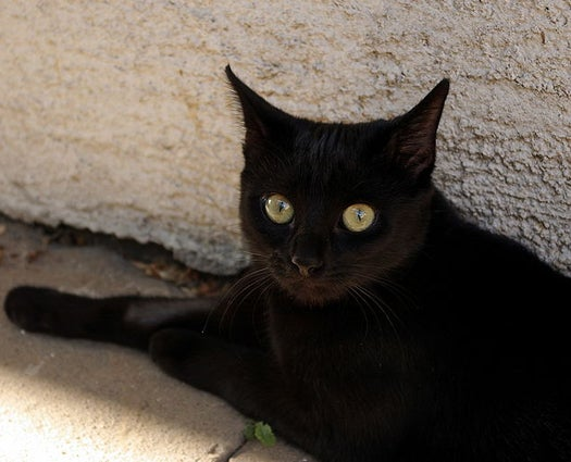 Furry Racism At The Pound: Why Is It Harder For Black Cats To Find Homes?