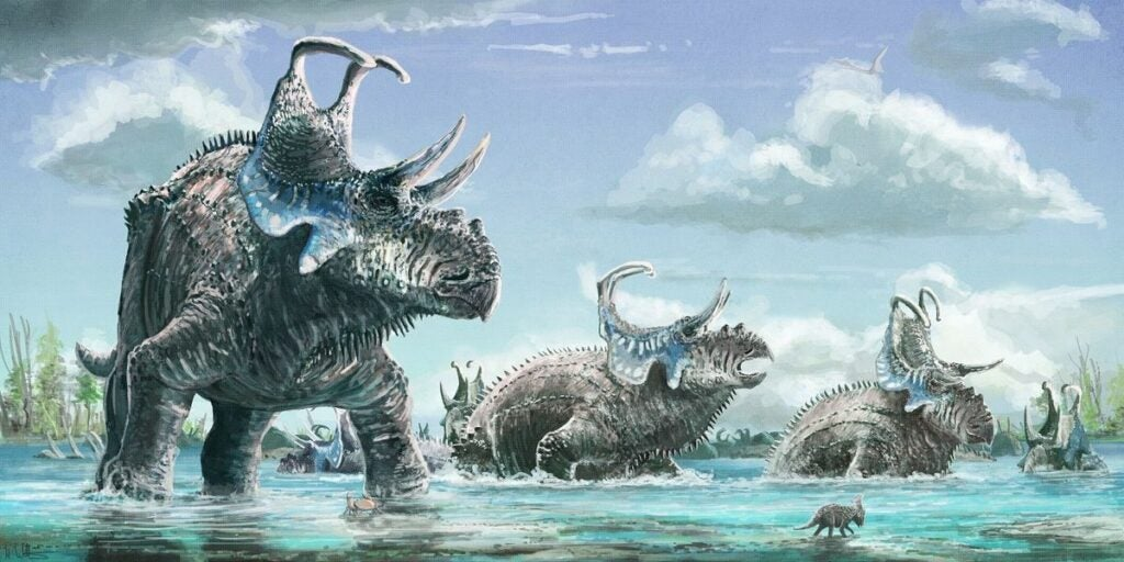 """Machairoceratops"