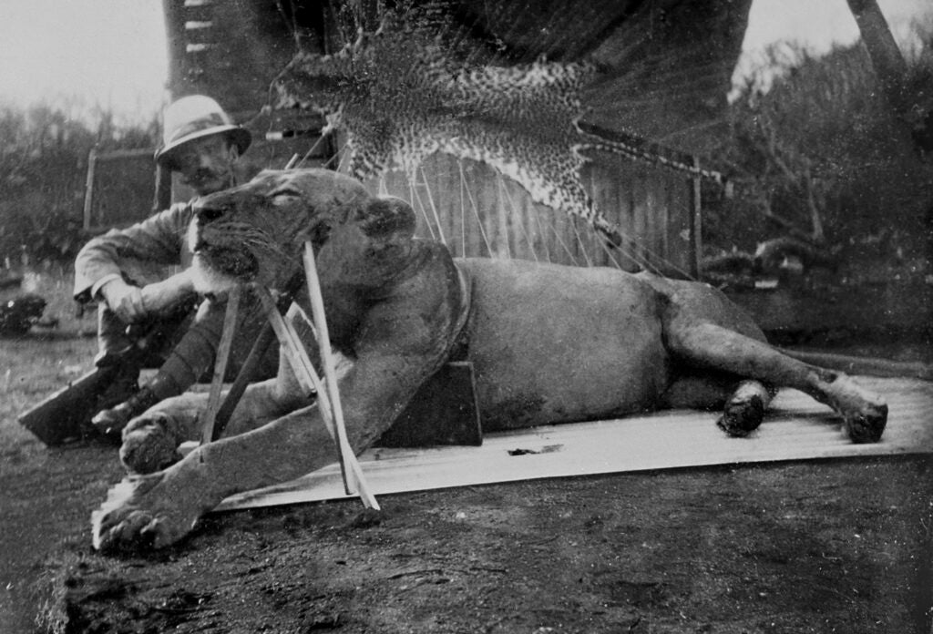 Patterson and lion