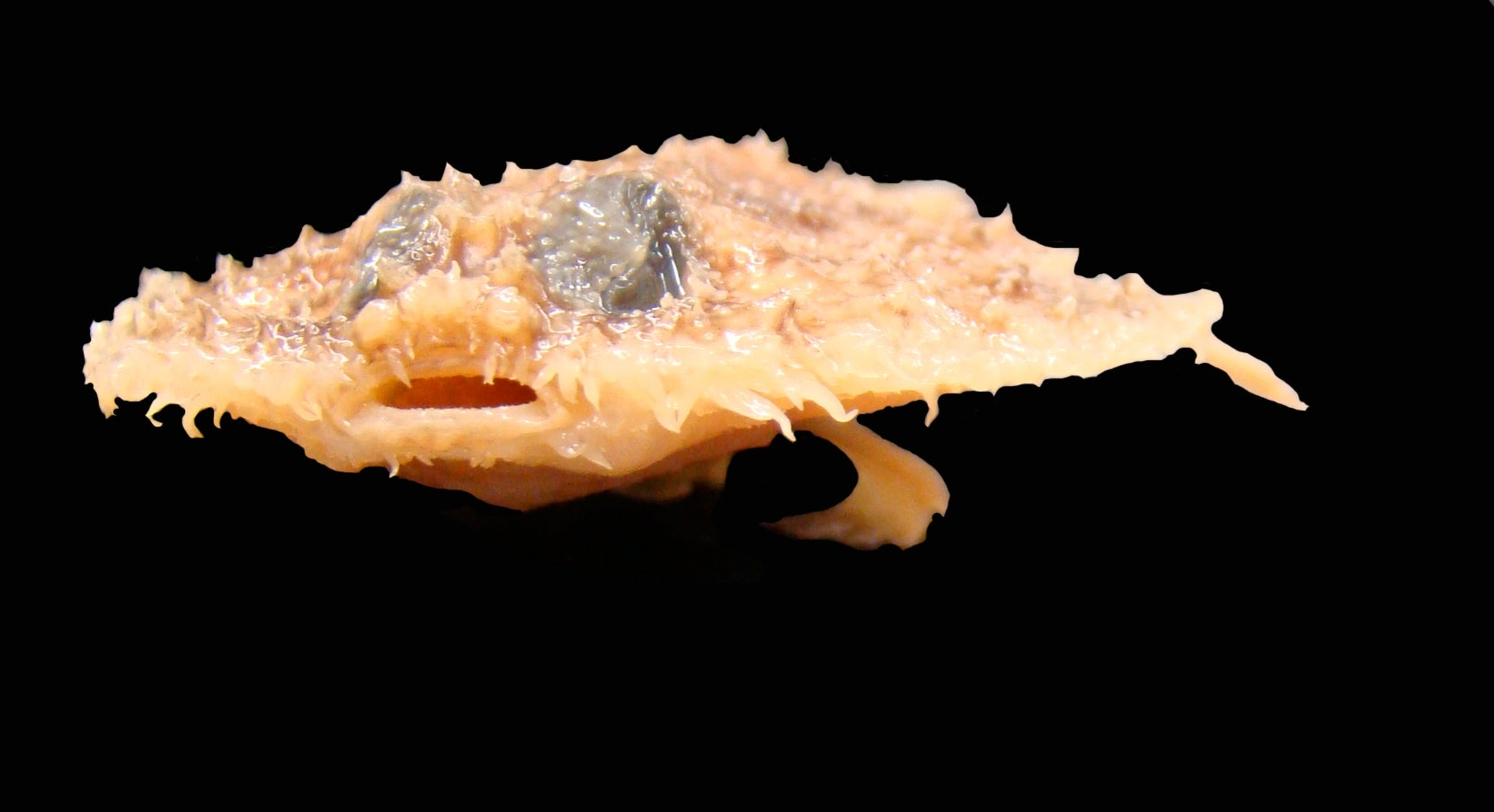 The Top 10 New Species of 2011