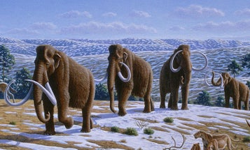Scientists to World: We're Going to Finally Clone that Woolly Mammoth We've Been Talking About