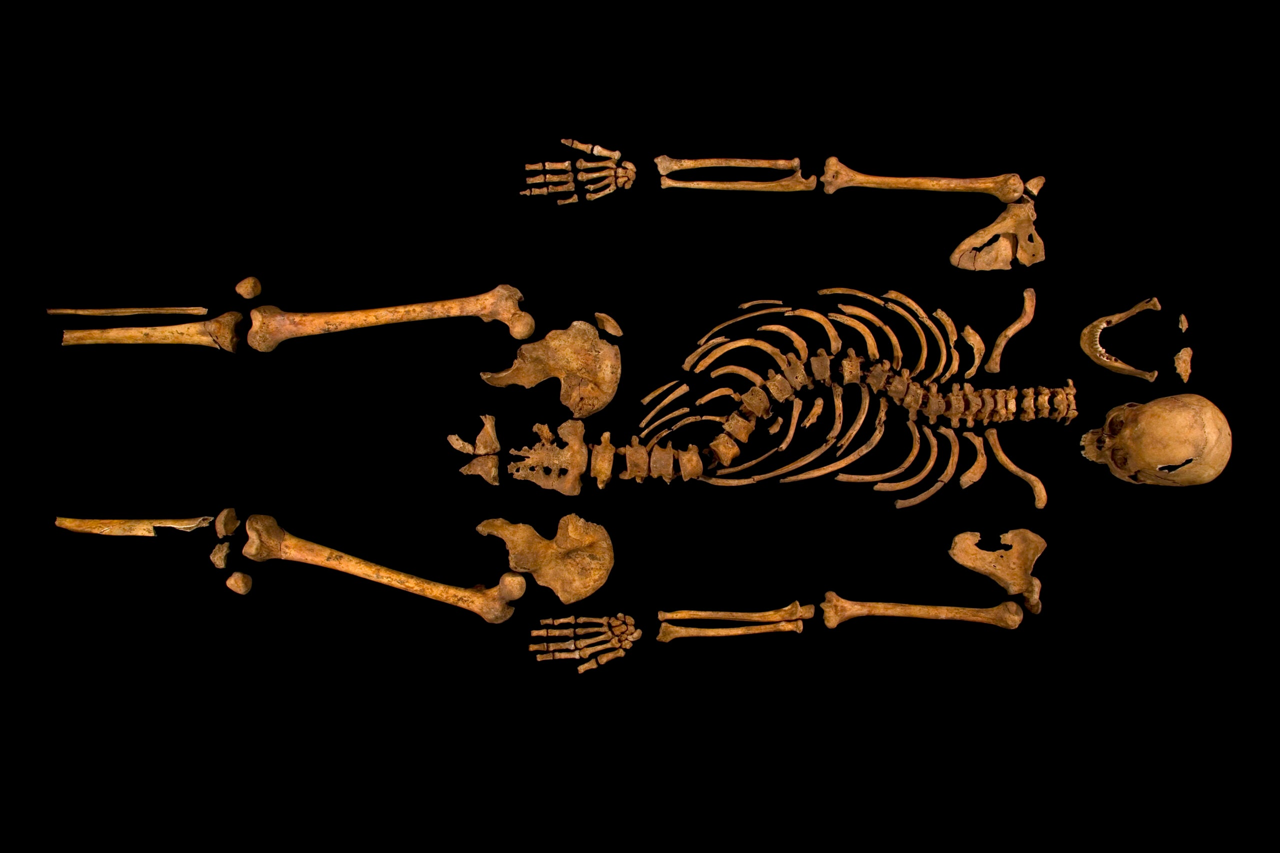 Explore A 3D Model Of Richard III's Parking-Lot Grave