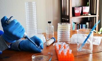 Is DIY Kitchen CRISPR A Class Issue?