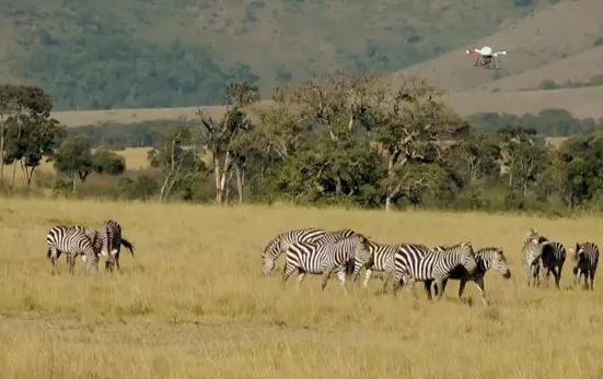 Video: Microdrone Goes On Safari, Buzzing Kenyan Wildlife To Capture Footage