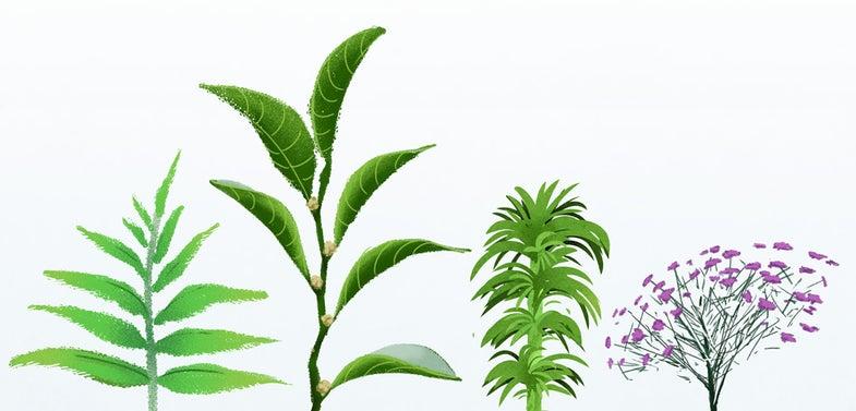 When Plants Get Metal: Part 2