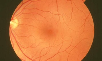 Engineering Adult Stem Cells to Cure Blind Mice