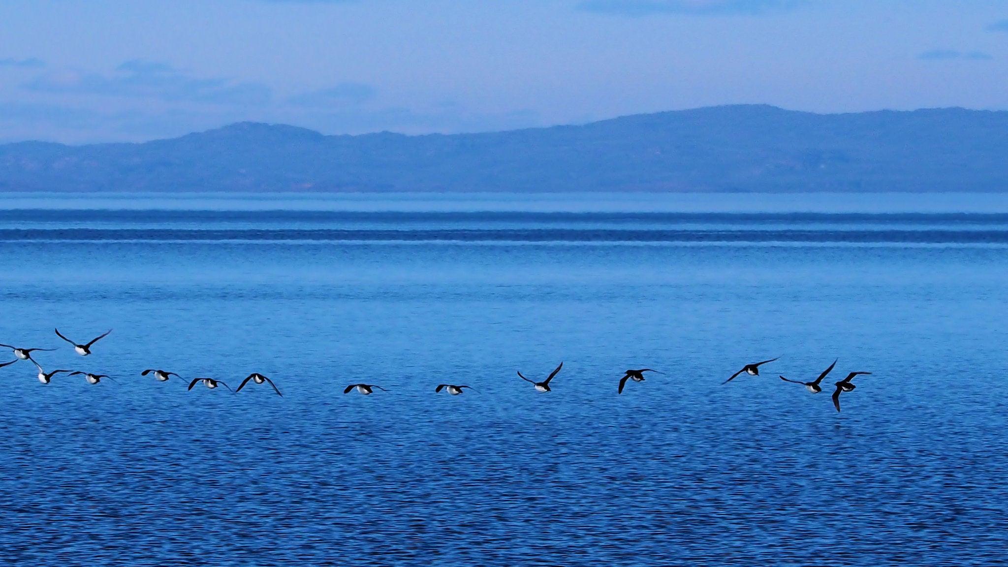 Bird poop might help keep the Arctic cool