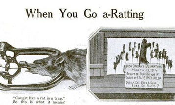 Archive Gallery: PopSci Goes A-Ratting (And More Pest Control)