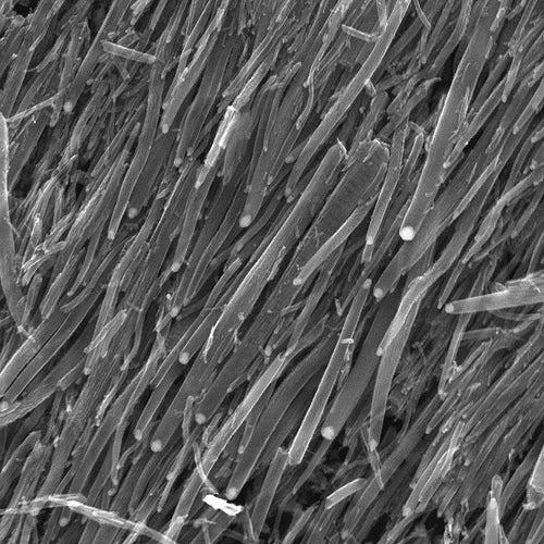 Bioelectric Nanotube Transistor Could Bring Biology and Machines Closer Together