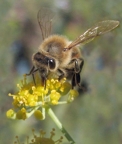 """German Airports Using """"Biodetective"""" Honeybees To Monitor Air Quality"""