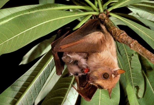 Bat Researchers: Please Pay Attention to Us After Halloween