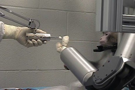 Monkeys Work Robotic Arm