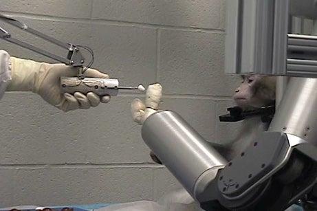 Monkeys Work Robotic Arm