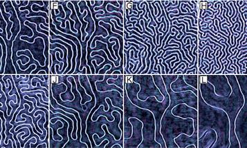 New Microscope Uses X-Rays To Resolve Nanoscale Details