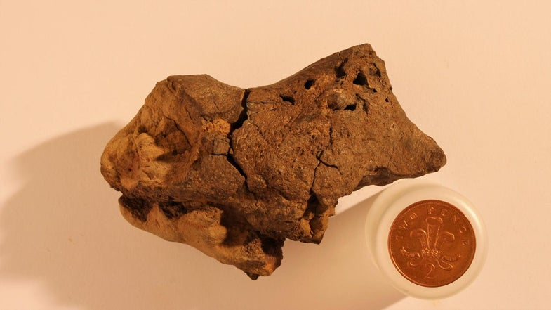 This May Be The First Dinosaur Brain Ever Studied. What Can It Teach Us?